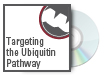 Targeting the Ubiquitin Pathway